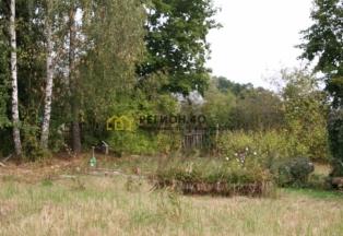 Дачный участок около СНТ Вашутино с садом и лесными деревьями